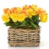 Castleton Home Begonia Floral Arrangements in Planter