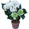 Ascalon Hydrangea Bush in Pot