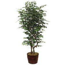 "90"" Ficus Tree in Planter"