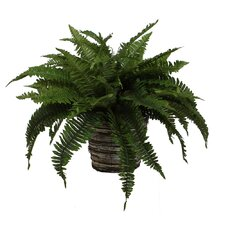 Floral Boston Fern Plant in Wild Wicker Basket