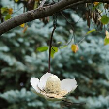 Magnolia Decorative Bird Feeder