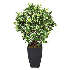 Artificial Variegated Ficus Ball Plant and Pot