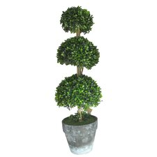 Three Ball Box Round Topiary in Pot