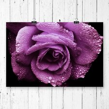 Flower Rose Photographic Print