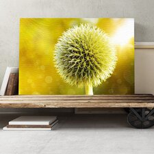 Yellow Flower Globe Thistle Photographic Print on Canvas