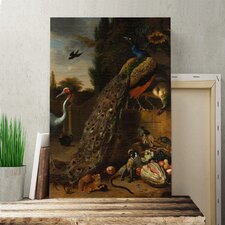 'Peacock' by Melchior d'Hondecoeter Painting Print on Canvas