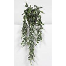 Eucalyptus Hanging Plant in Pot