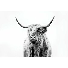 'Portrait of a Highland Cow' by Dorit Fuhg Photographic Print