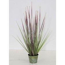 Bamboo Grass in Pot
