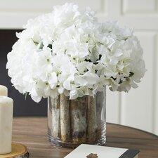 Hydrangea Birch in Flower Pot