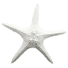 White Starfish Wall Décor