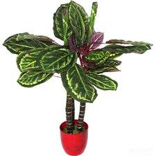 Artificial Calathea Veitchiane Plant