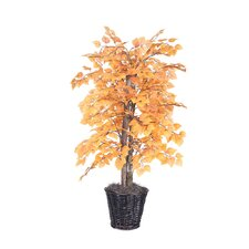 Deluxe Natural Ficus Tree in Basket