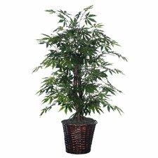 Japanese Bush Floor Plant in Pot