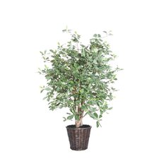 Blue Olive Tree in Basket
