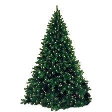 12' Classic Sequoia Pre Lit Tree