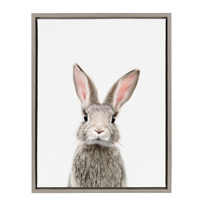 'Female Baby Bunny Rabbit' Framed Photographic Print on Canvas