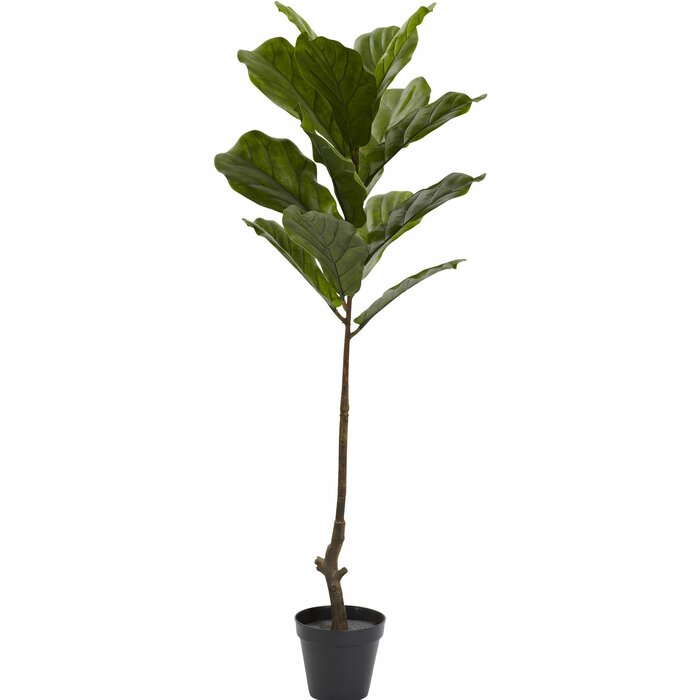 Fiddle Leaf Tree in Pot