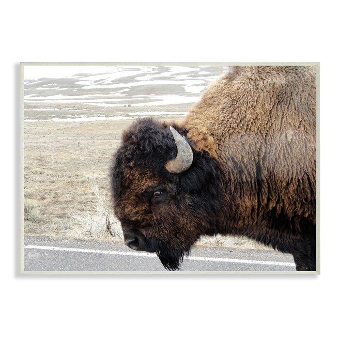 'Beautiful Buffalo' Photographic Print