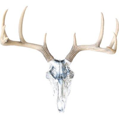 Deer Wall Decor near and deer faux taxidermy buck skull wall décor & reviews | wayfair