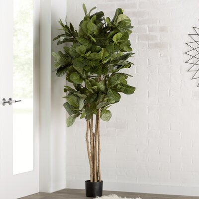 brayden studio fiddle leaf fig tree in pot reviews wayfair