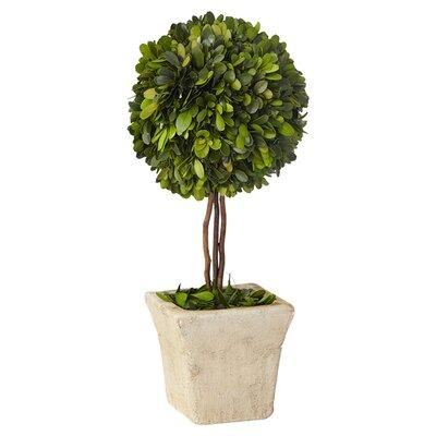 Lark Manor Boxwood Topiary in Pot & Reviews | Wayfair