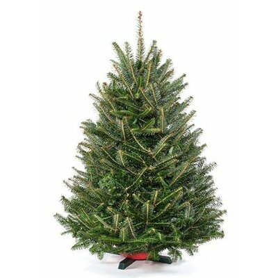 3 green fir freshly cut christmas tree with stand - Real Christmas Trees Delivered